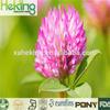 low price 100% natural trifolium pretense extracts20:1