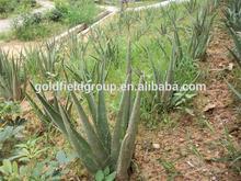 Nutrilite productos suplemento de alimentos para bebés Aloe Vera cápsulas