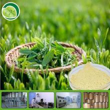 tea polyphenols catechin