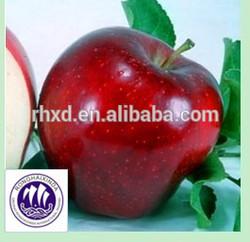 fresh red delicious Washington apples
