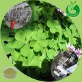 100% naturales de alta calidad de la alfalfa alfalfa extracto de polvo de harina de alfalfa