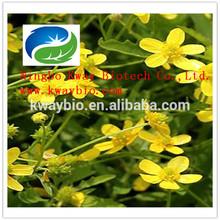 Natural Cat's Claw Extract / Ranunculus Ternatus Thunb Powder