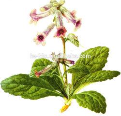 Rehmannia glutinosa extract, fine brown powder, 5:1, 10:1, 20:1
