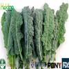 100% Natural yucca extract powder