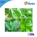 diferentes tipos de herbicidas agrícolas surfactante de silicone iota2000 para spray modificador