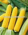 نشا الذرة الغذاء الصف 25kg المكونات في حقيبة