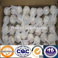 good quality white garlic plantation exporter
