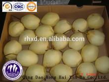 China Fresh Yapears/Yali pear