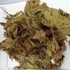 folium mori factory direct supply sang ye dried Mulberry leaf