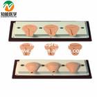 Senior Artificial Abortion Uterus Simulator Uterus Dissection Model BIX-FT33A