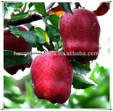 Shandong Fresh Best Food Huaniu Apple Exporter