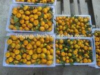 Nanfeng honey baby mandarin orange citrus fruit