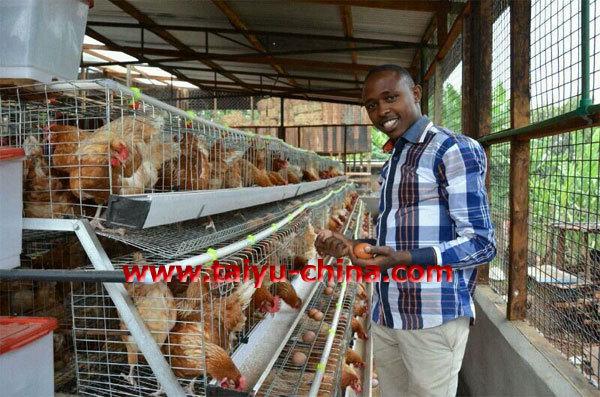 Poultry Farming in Kenya-layers Poultry Farming in Kenya