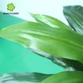 Nomi delle foglie degli alberi, albero di natale artificiale, albero di plastica