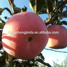 China 2014 Crop Fresh Red Delious Fuji Apple