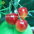 Guangzhou artificial de frutas por atacado, fruta artificial de plástico fornecedor de cerejas