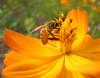 bee honey importers/bee honey price/best honey in the world