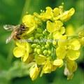 Puro maduro honey\honey bulk\honey las abejas para la venta