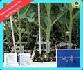2014 100% jardín clips de plástico, agrícola de calabaza injerto de clips de herramientas para el injerto