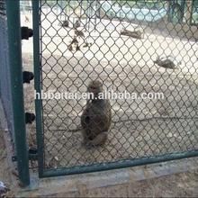 hebei hot sale mesh pet monkey cage