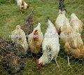 foro di forma esagonale e rete di recinzione applicazione Home Depot pollo recinto di filo metallico