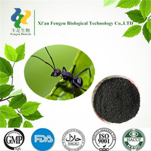 Best Quality Raw material black ants 20:1 & black ants sex