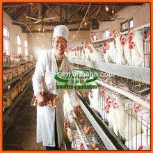 Design chicken breeding cage for layer chicken(Innaer manufacturer)