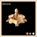 médicaux mannequin of dentata os