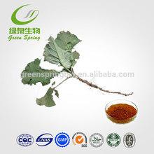 burdock seed extract powder /nature burdock extract / great burdock root extract