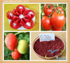 100% Tomato extract Powder lycopene CAS: 502-65-8