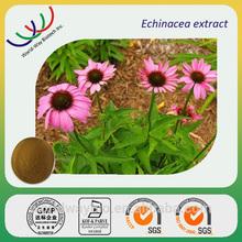 Free samples GMP HACCP KOSHER FDA factory supply polypheno chicoric acid Echinacea extract 4:1
