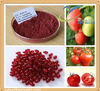100% Natural Tomato Extract powder Lycopene 20% Lycopene in bulk