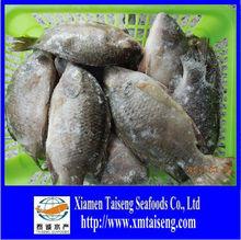 Wholesale tilapia whole fish distributor