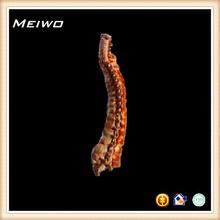 artifical skeleton of vertebral column