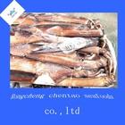 Frozen squid argentina illex argentinus in rongcheng