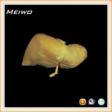 fegato modello del corpo umano organi
