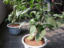 grow indoor vegetable garden organic agriculture fertilizer