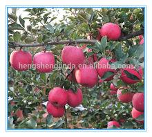 Fresh Fuji Apple From China
