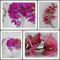 China de fábrica al por mayor precio de flores de plástico para el hogar/sala/oficina/la decoración del hotel orquídea artificial