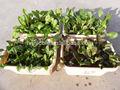 orto prezzo ghiaia per serre agricole a basso costo utilizzato