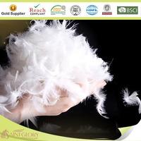 White Goose Feather