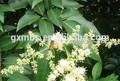 Mel de abelha venom/desidratados mel/pinho mel