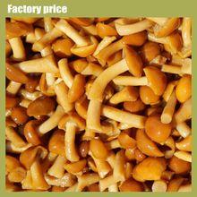 Truffles Mushrooms Price