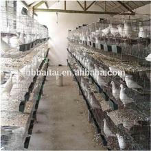 de acero de carreras de palomas de la jaula con el mejor precio y alta calidad