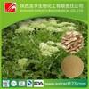 Manufacturer sales radix angelicae sinensis extract powder