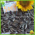 comestibles de girasol semillas a granel en