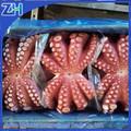 جميع أنواع المأكولات البحرية الطازجة المجمدة الأخطبوط بالجملة جديدة للبيع