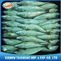 chalut de poissons congelés maquereau du pacifique de catégorie a