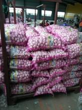 normal white garlic 5.0cm packed in 20kg mesh bag