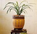 greenhous orquídea do solo para o crescimento da flor de mídia